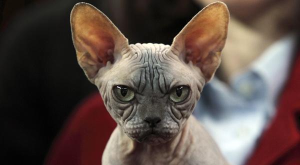 Chat pas content chat dr le sur chat - Chat tout mignon ...