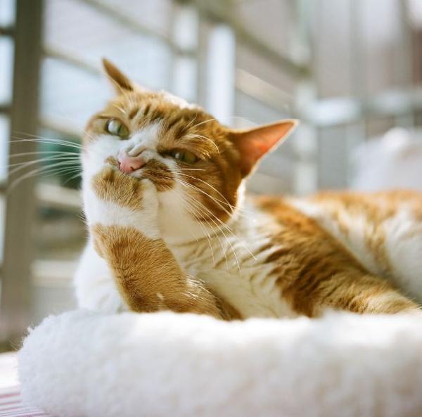 chat penseur chat dr le sur chat. Black Bedroom Furniture Sets. Home Design Ideas