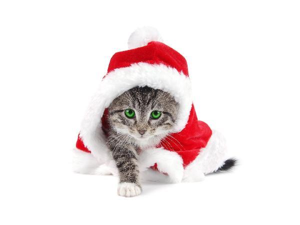 Jespère que sa hotte est bien remplie de croquettes pour tous ses petits camarades chats qui ont été sages. Joyeux noël et Miaou à tous!