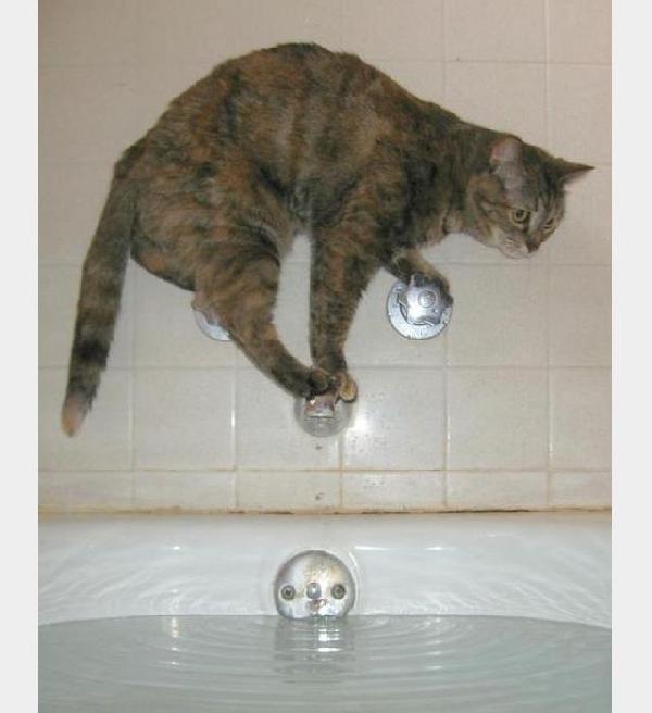 chat qui a peur de l'eau