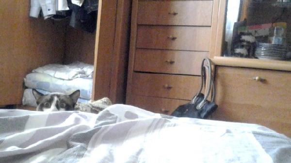 chat qui espionne