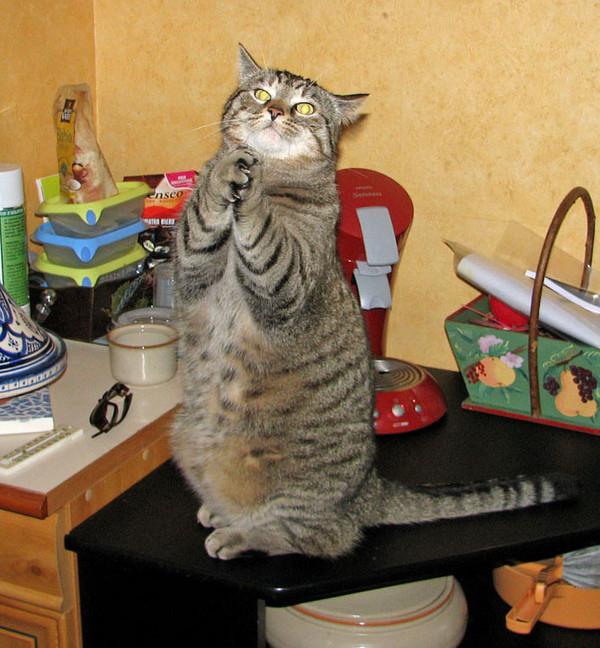 chat qui prie