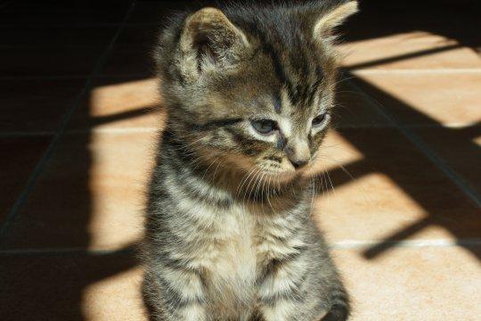 chat qui regarde