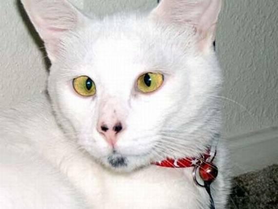 Image De Chat Rigolo chat rigolo - chat drôle sur chat-mignon