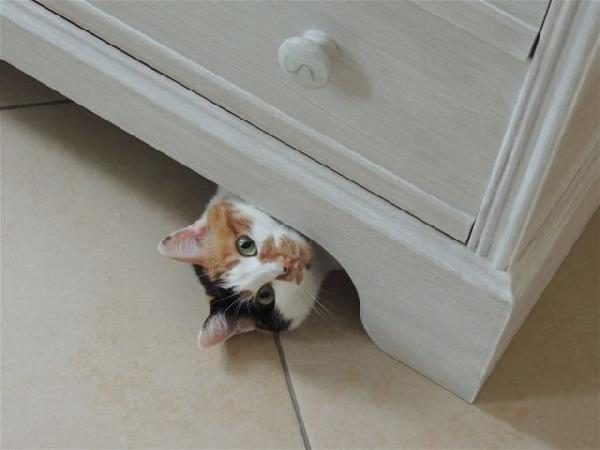chat sous meuble