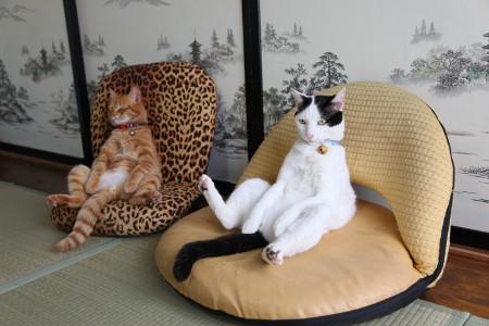 chat sur fauteuil