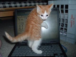 chat sur ordinateur