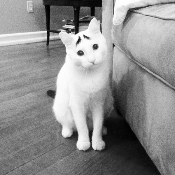 chat tout triste