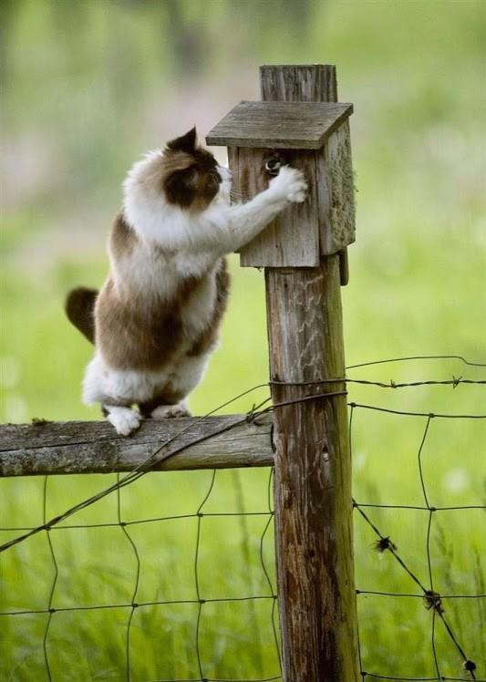 chat très malin