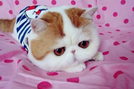 Chat tr s rare chat dr le sur chat - Chat tout mignon ...