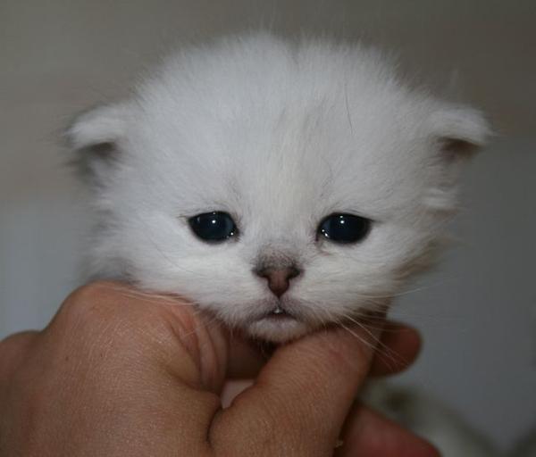 chaton bébé