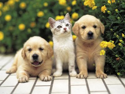 Chaton et chiot chat et chien sur chat - Photo de chien et chat mignon ...
