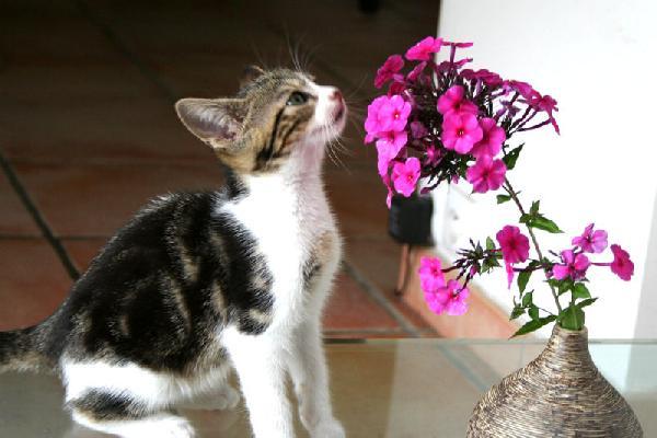 chaton et fleur