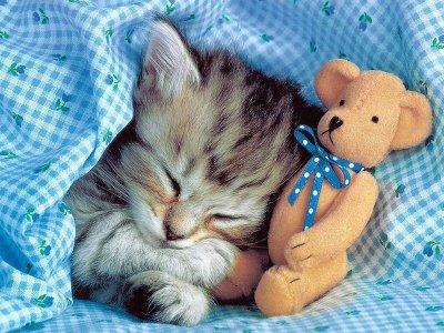 chaton et peluche