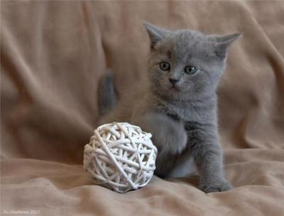 chaton jouet chaton sur chat. Black Bedroom Furniture Sets. Home Design Ideas