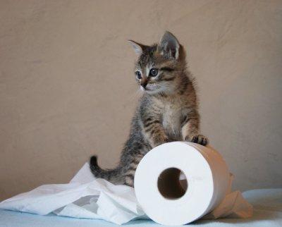 chaton joueur chaton sur chat. Black Bedroom Furniture Sets. Home Design Ideas
