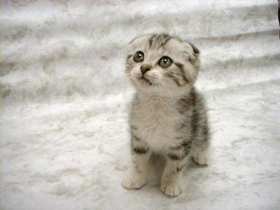 Chaton mignon chaton sur chat - Image des mignon ...