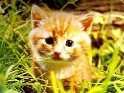 Chaton mimi chaton sur chat - Image de chaton trop mimi ...