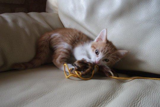chaton qui joue chaton sur chat. Black Bedroom Furniture Sets. Home Design Ideas