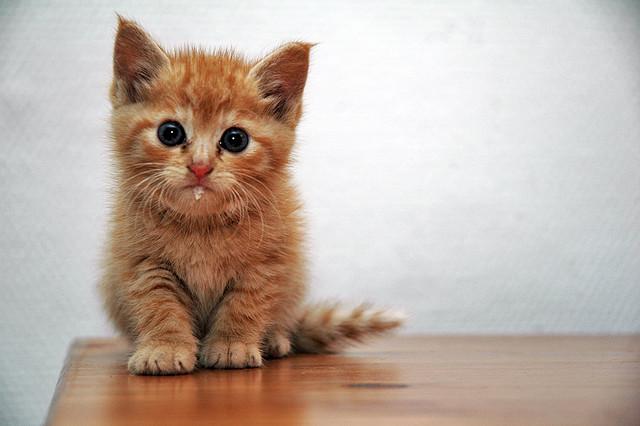chaton roux surpris chaton sur chat. Black Bedroom Furniture Sets. Home Design Ideas
