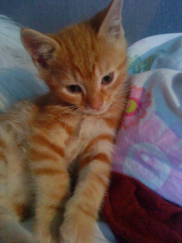 Le regard dans le vide, comme absorbé par ses pensées, le petit chaton sur cette photo est vraiment très beau!!!