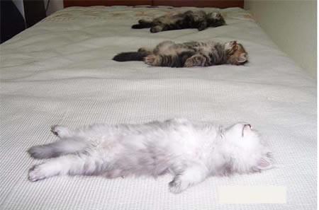 chaton sur le lit chat en plein r ve sur chat. Black Bedroom Furniture Sets. Home Design Ideas