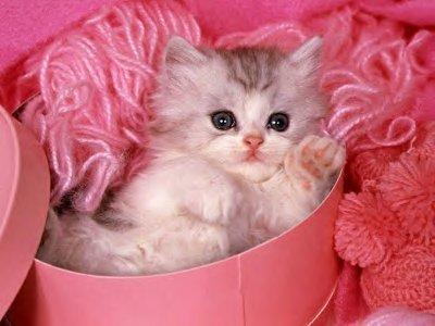 Chaton tout mignon chaton sur chat - Chat tout mignon ...