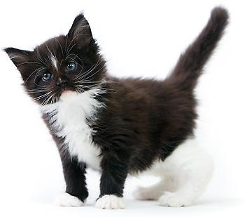 chaton tout seul chaton sur chat. Black Bedroom Furniture Sets. Home Design Ideas