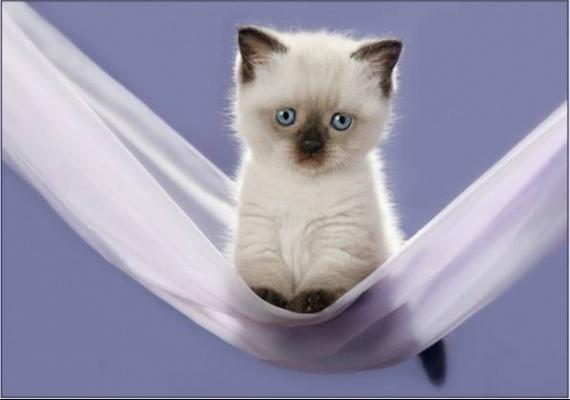 chaton trop mignon chaton sur chat. Black Bedroom Furniture Sets. Home Design Ideas