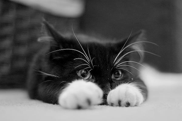 Chaton trop mimi chaton sur chat - Image de chaton trop mimi ...