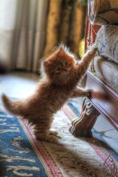 chaton trop petit