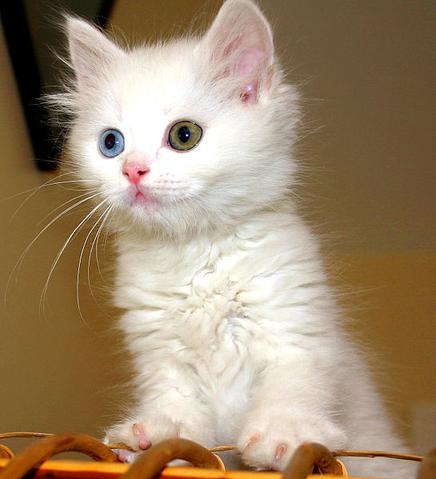 Chaton vairon chaton sur chat - Image des mignon ...