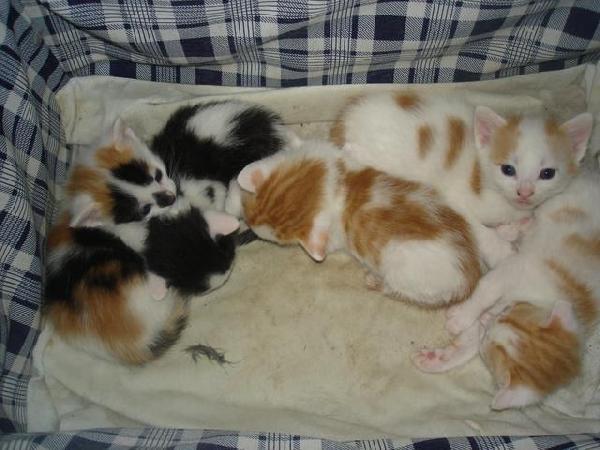 chatons dans un panier chaton sur chat. Black Bedroom Furniture Sets. Home Design Ideas