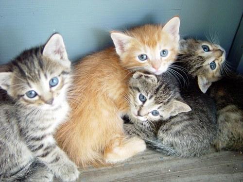 """Résultat de recherche d'images pour """"petit chaton"""""""
