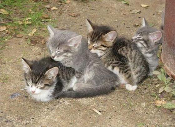 Ils se sont mis en rang doignon pour faire une grosse sieste, comme si il était indispensable quils soient tous ensemble.