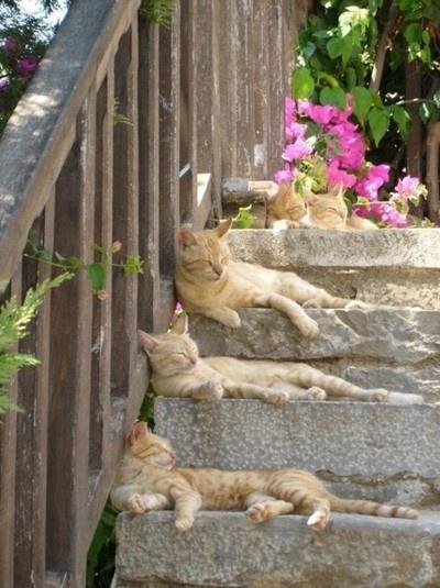 chats escalier chat en plein r ve sur chat. Black Bedroom Furniture Sets. Home Design Ideas