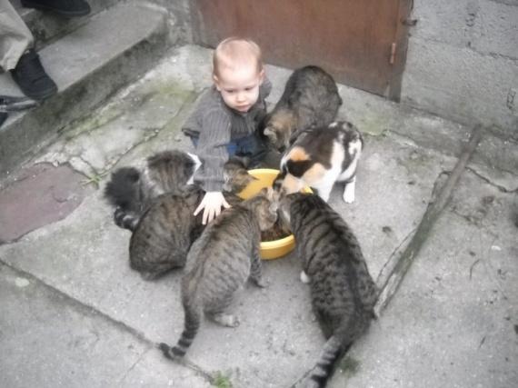 chats et bébé