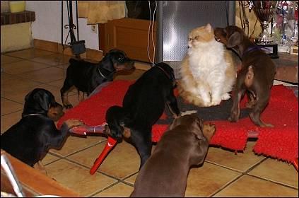 homme rencontre gratuit de pour 100 chien chat rencontre et site  Foot Avec Suarez et Cavani gratuite