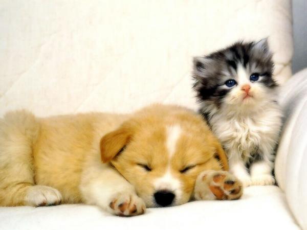 Tableau chat et chien mignons • Posters et tableaux sur toile • PIXERS