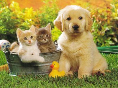 Dans le jardin chat et chien sur chat - Photo de chien et chat mignon ...