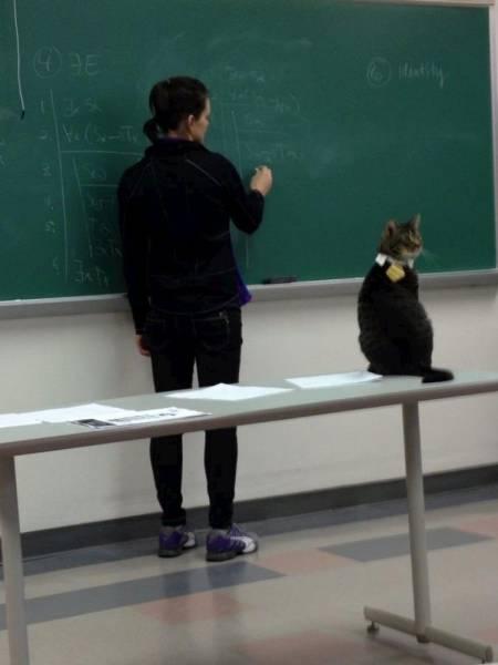 école chat