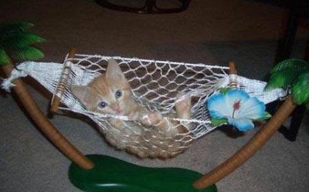 hamac pour chat chat dr le sur chat. Black Bedroom Furniture Sets. Home Design Ideas
