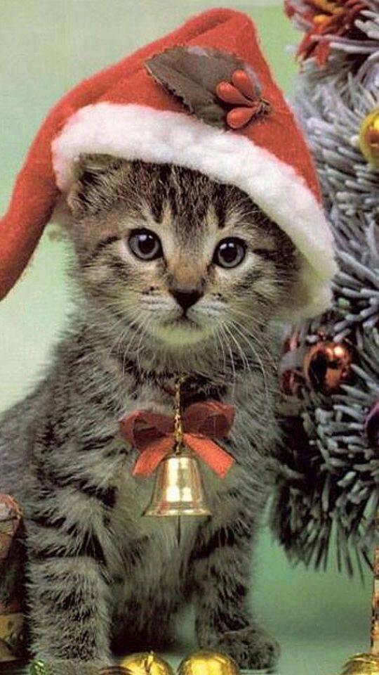 Le chat de noel chat d guis sur chat - Image de chat de noel ...
