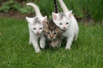Les trois chats chaton sur chat - Image de chat a imprimer ...