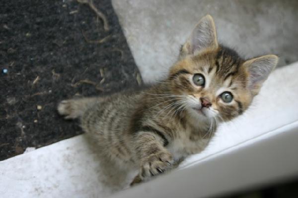 Patte tendue chaton sur chat - Chat tout mignon ...