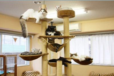 perchoir pour chat