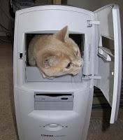 petit chat qui se cache