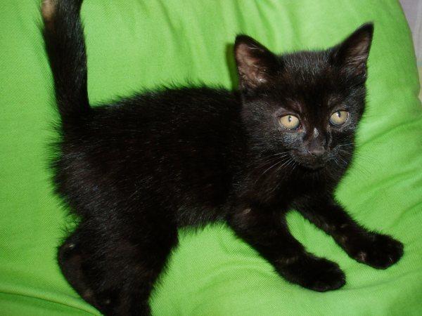 Petit chaton noir chaton sur chat - Chat tout mignon ...