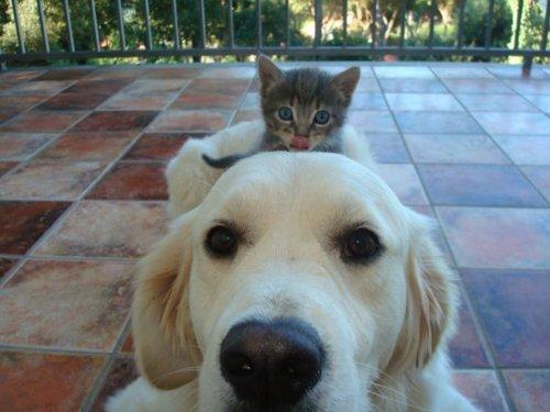 Dog Cat Vote