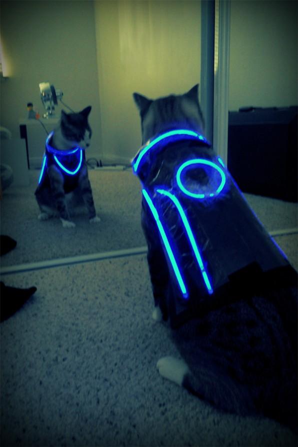 photo chat déguisé